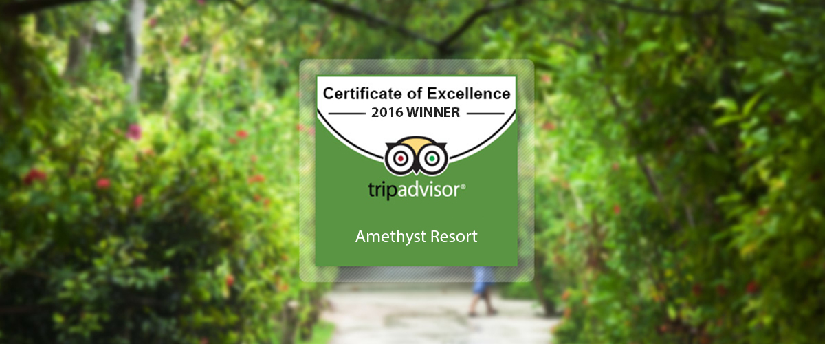 Certificate of Excellence - 2016 Winner